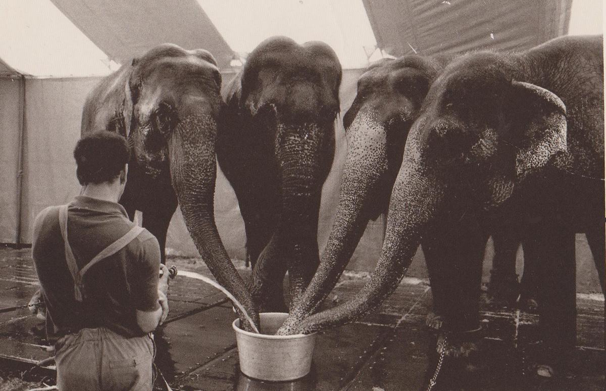 象のための水