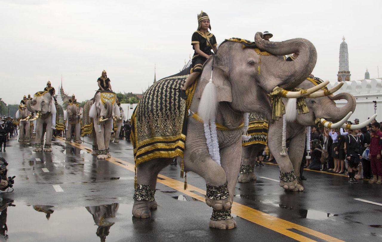 with-elephants